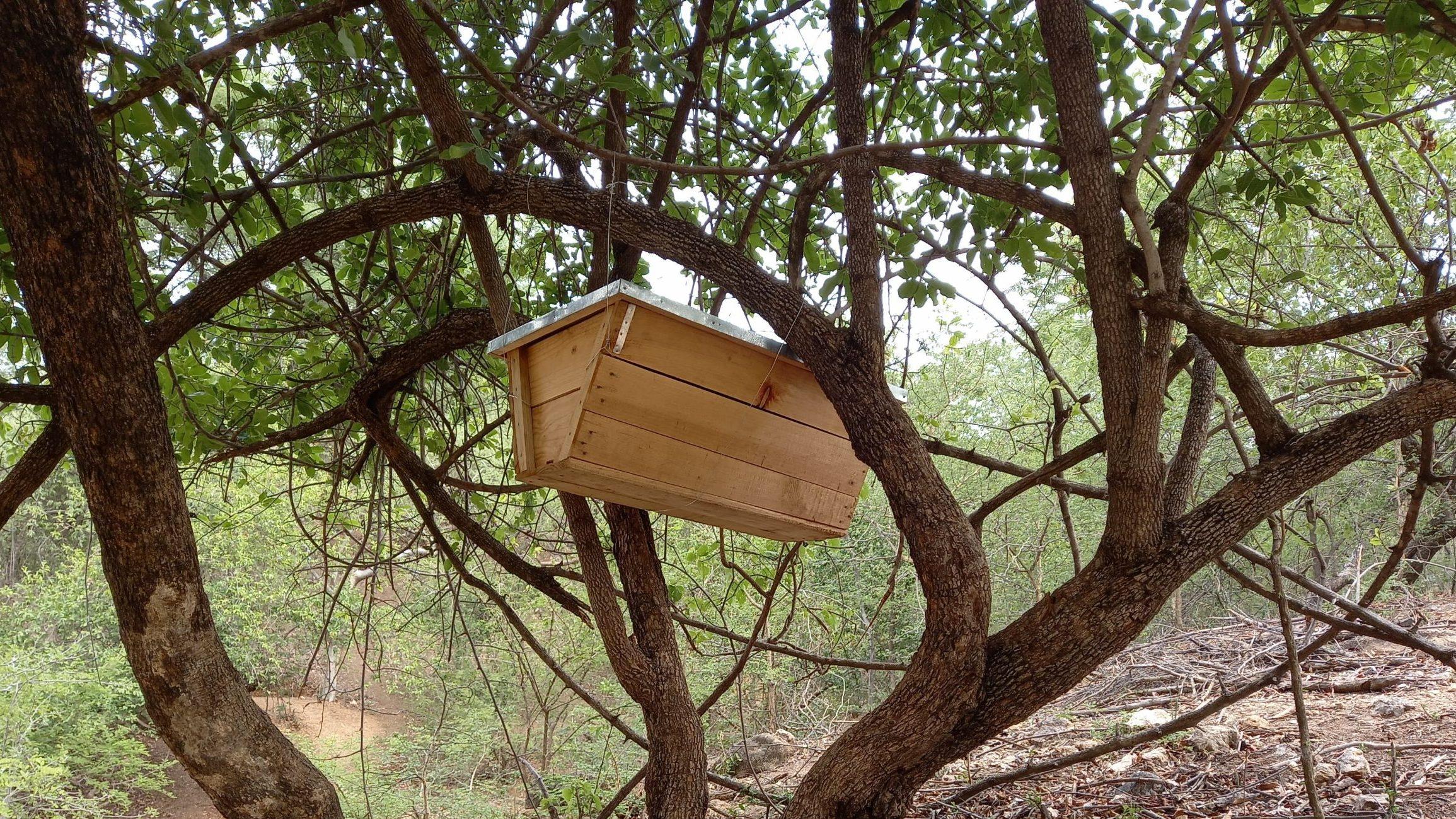 beekeeping for economic revenue