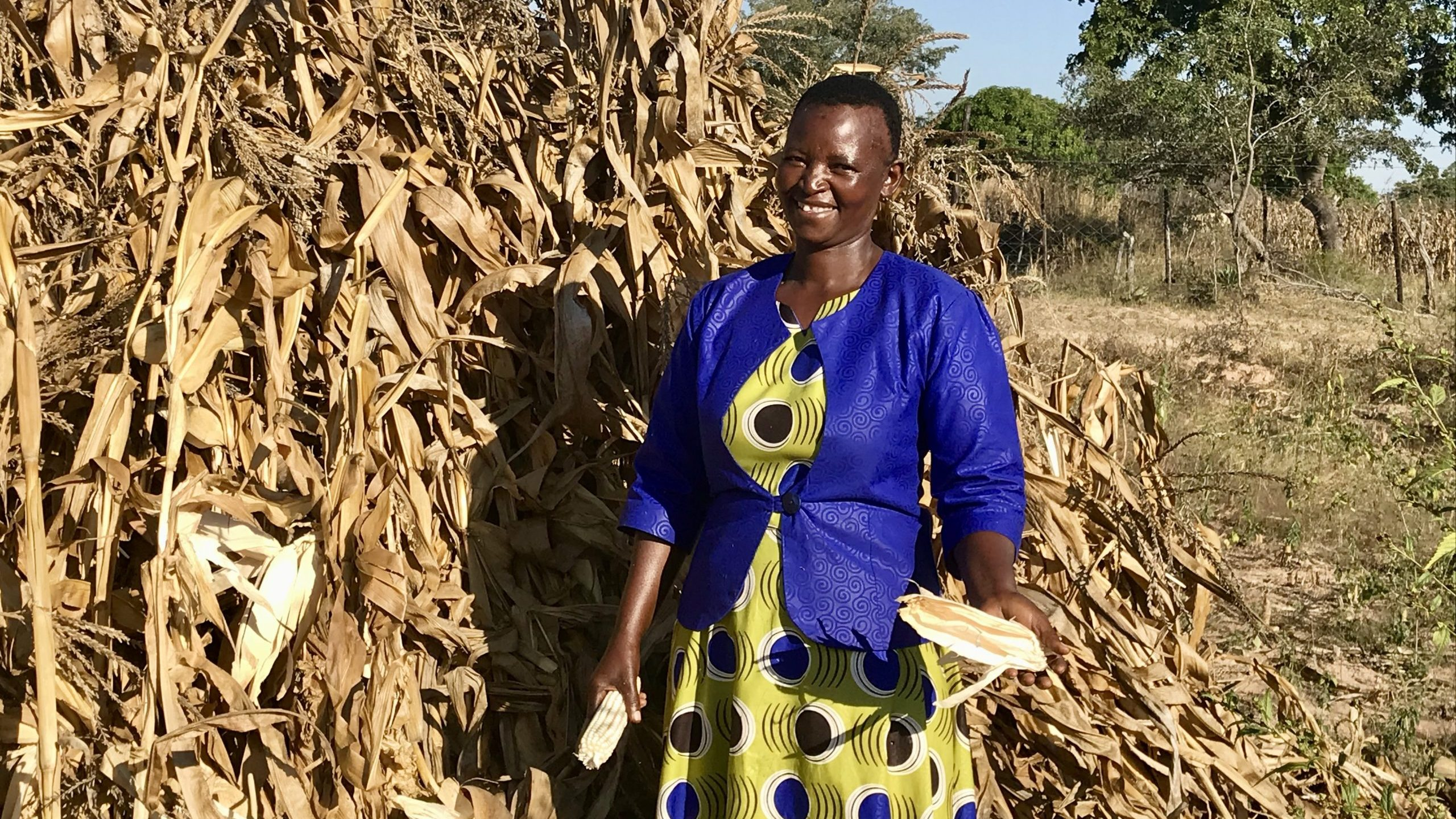 Smallholder farmer agricultural recovery after Idai
